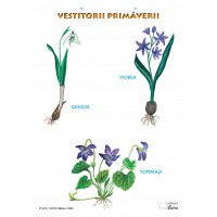 """Vestitorii primaverii"" A3 (pe suport magnetic)"