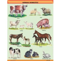 """Animale domestice"" A1 (pe offset de 160 g/mp)"