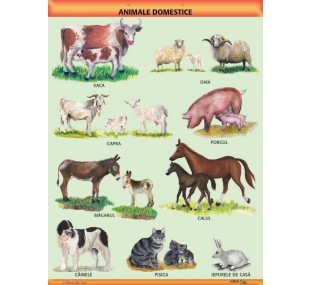 """Animale domestice"" A1 (pe suport magnetic)"