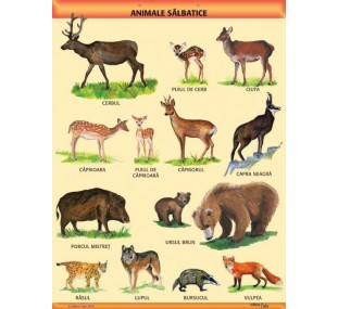"""Animale salbatice"" A1 (pe suport magnetic)"