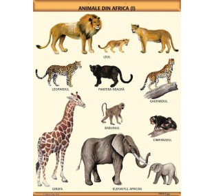"""Animale din Africa (I)"" A1 (colectia planse)"